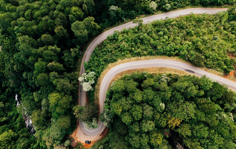 A bendy road winding through a forest of large trees